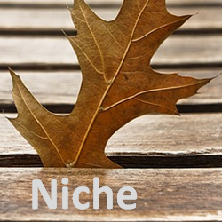 yougetthemoney.com-niche