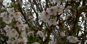 yougetthemoney.com-spring6_001