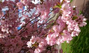 yougetthemoney.com-spring7
